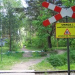 Rowerem po Puszczy Kampinowskiej, Palmiry