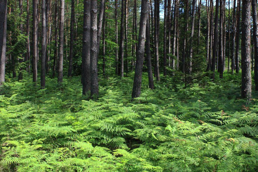 drzewa w slowinskim PN