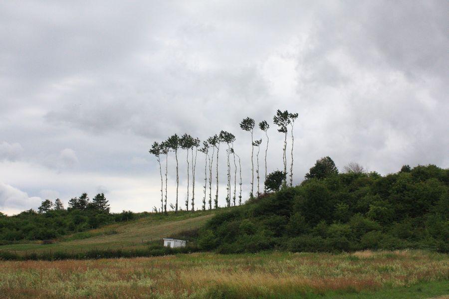 drzewa nad zatoką pucką