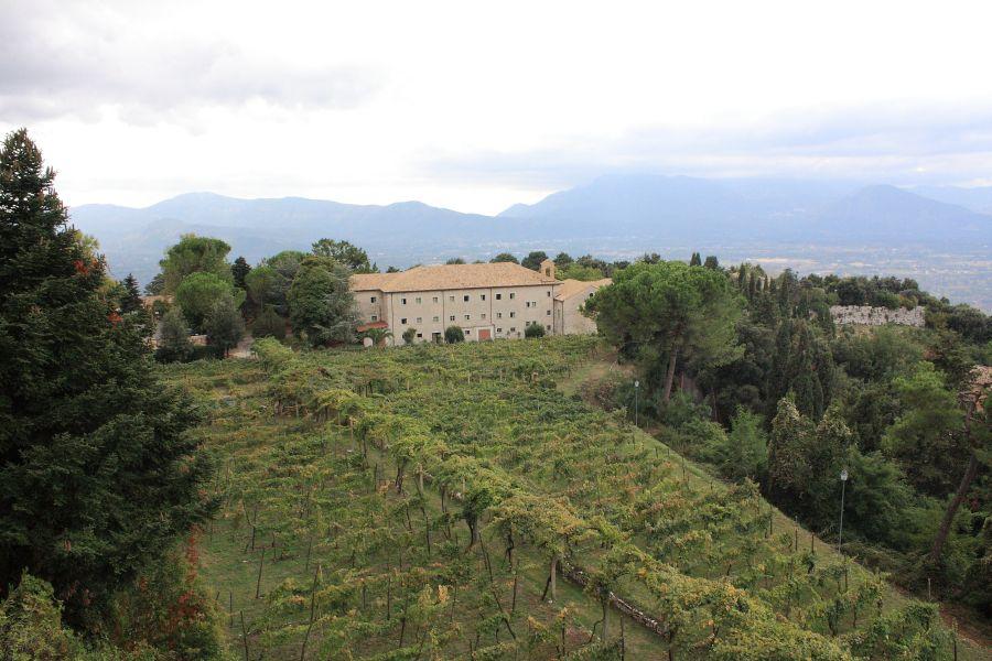 winnice na Monte Cassiono