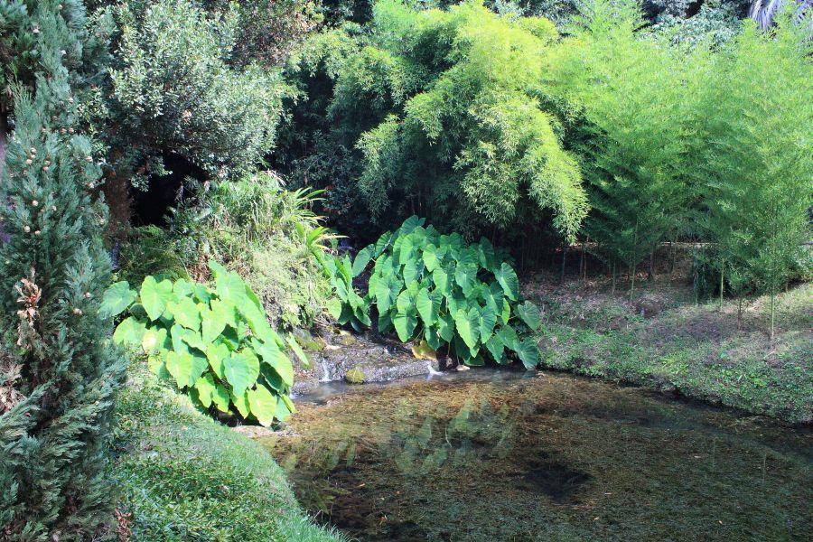 Caserta zieleń w ogrodach angielskich